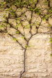 Vine Growing On Wall Stock Photo
