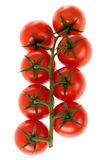 Vine Grown Tomatoes Stock Image