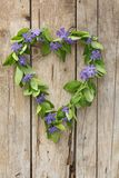 Vine Heart. A vine with blue flowers in heart shape, on a wooden surface Stock Photos