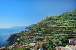 Vine hill in Manarola, Italy Stock Photo
