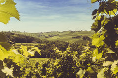 Vine with hills in the background. Vine and hills in the background Stock Image