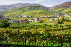 Vine Hills in Lower Austria Royalty Free Stock Photography