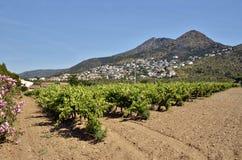 Vine i roregionen i Spanien arkivbild