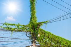 Vine ivy plant cover on power line electricity post. In Thailand Royalty Free Stock Images