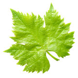 Vine leaf. Stock Photography