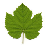 Vine Leaf Stock Images