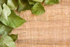 Vine leaf background Royalty Free Stock Photos
