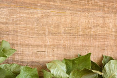 Vine leaf background Stock Photo