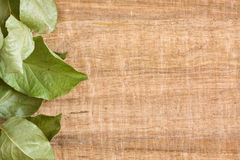Vine leaf background Royalty Free Stock Photography