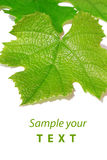 Vine leaf,background Stock Photos