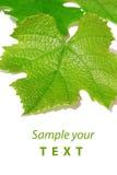 Vine leaf,background stock photos