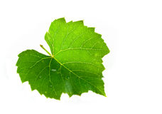 Vine leaf. Isolated on white Royalty Free Stock Images