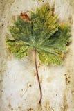 Vine Leaf on Old Paper Stock Image