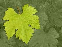 Vine leaf pattern background Stock Image