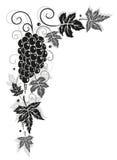 Vine, leaves, autumn, border Stock Image