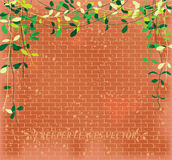 Vine leaves creeper over  brick wall pattern Royalty Free Stock Images