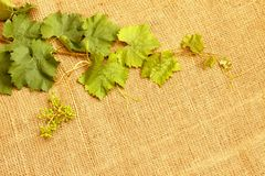 Vine leaves and grape Royalty Free Stock Images