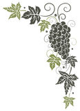 Vine, leaves, grapes Royalty Free Stock Photo