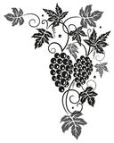Vine, leaves, grapes Stock Images