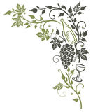 Vine, leaves, grapes Royalty Free Stock Photography