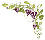 Vine leaves, grapes Stock Images