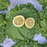 Vine leaves and lemon slice Stock Images