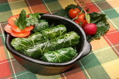 Vine leaves rolls Royalty Free Stock Image