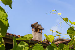 Vine leaves and roofs of hill village in Italy Stock Photos