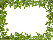 Vine leaves with small flower frame Royalty Free Stock Photography