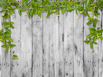 Vine leaves with small flower frame Stock Image
