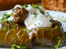 Vine leaves stuffed stock image