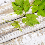 Vine leaves on wooden table close-up Stock Photography