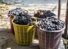 Vine make Stock Photos