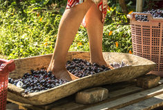 Vine make. During the vintage years in California, some winery and fairgrounds hold a publicly-held grape-crushing feast for symbolic purposes Stock Photo