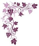 Vine med druvor vektor illustrationer