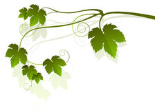 Vine motif stock illustration