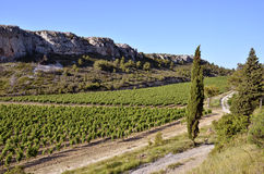 Vine near of Narbonne in France Royalty Free Stock Photography
