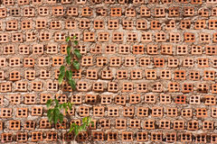 Vine On Old Brick Wall Royalty Free Stock Photo