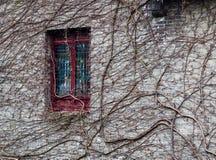 Vine plant creeping up a grey brick wall Stock Photo