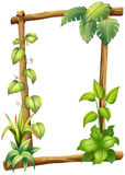 A vine plant Royalty Free Stock Image