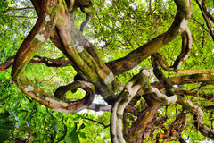 VINE. A plant whose stems spread along the ground and root by means of adventitious roots. Creeping stems with short internodes are called runners, and those Stock Photos
