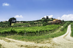 Vine plantations and farmhouse in Italy Stock Photos