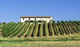 Vine plantations and farmhouse in Italy Stock Photo