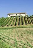 Vine plantations and farmhouse in Italy Stock Images