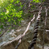 Vine plants growing upwards at a steep cliff in Stock Photos