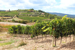 Vine plants and hills in Tuscany Stock Image