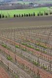 Vine in Razes, France Stock Photo