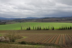 Vine in Razes, France Stock Image
