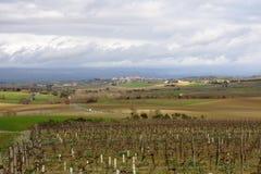 Vine in Razes, France Royalty Free Stock Image