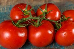 Vine with red ripe tomatoes from Dutch greenhouse Stock Images
